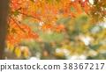 樹葉 葉子 背景 38367217