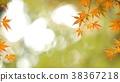 樹葉 葉子 背景 38367218