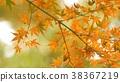 樹葉 葉子 背景 38367219