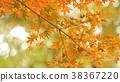 樹葉 葉子 背景素材 38367220