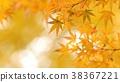 樹葉 葉子 背景 38367221