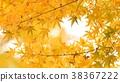 樹葉 葉子 背景 38367222
