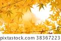 樹葉 葉子 翠綠 38367223