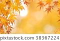 樹葉 葉子 背景素材 38367224
