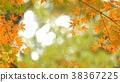 樹葉 葉子 背景素材 38367225
