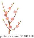 복숭아, 식물, 수채화 38380118