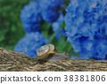수국과 달팽이 38381806