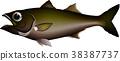 高品质的鱼 鱼 矢量 38387737