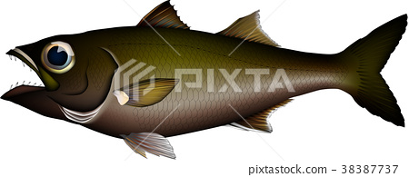 high quality fish, fish, fishes 38387737