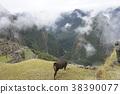 마추피추에있는 동물 38390077