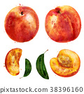 fruit orange watercolor 38396160