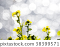 rape, rape blossoms, green flower 38399571