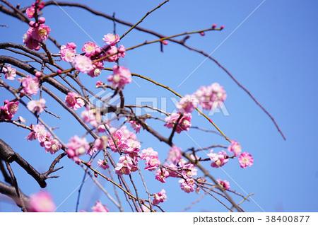 Plum Blossom Park 38400877