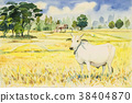 Watercolor painting colorful of rice fird and cow. 38404870