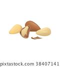 Brazil nut eating 38407141