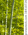 죽림, 대나무 숲, 대나무 38410726