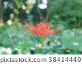 bloom, blossom, blossoms 38414449