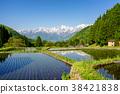 水稻 风景 堆 38421838