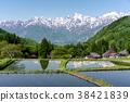 北阿爾卑斯山和稻田奧尼村 38421839