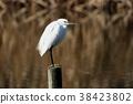 野生鸟类 野鸟 鸟儿 38423802