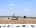 非洲象 大象 動物 38427362