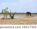ช้างแอฟริกัน 38427363