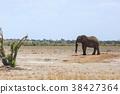非洲象 大象 動物 38427364