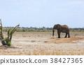 非洲象 大象 動物 38427365