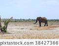 ช้างแอฟริกัน 38427366