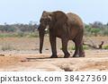 非洲象 大象 動物 38427369