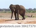ช้างแอฟริกัน 38427370