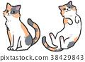 猫 猫咪 小猫 38429843