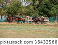 animal, equine, feeding 38432568