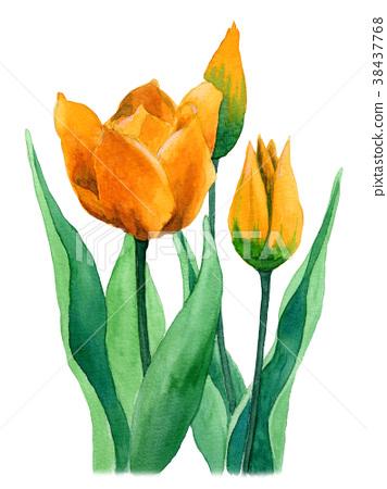 水彩绘的黄色郁金香 38437768