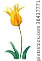 郁金香 花朵 花卉 38437771