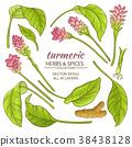turmeric elements set 38438128
