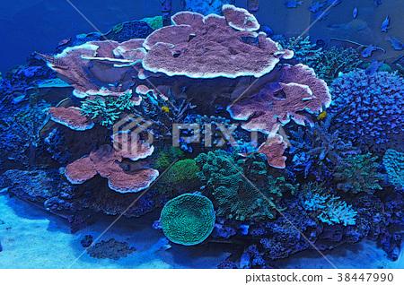 Paradise under the sea 38447990