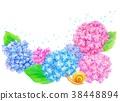 繡球花 花朵 花 38448894