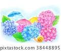 繡球花 傘 蝸牛 38448895