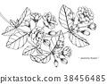ดอกไม้,เวกเตอร์,ดอกไม้บาน 38456485