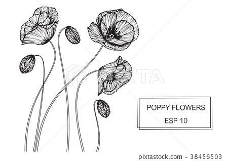 Poppy Flower Drawing Illustration Stock Illustration 38456503