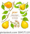 pear, white, leave 38457110