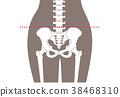 framework, skeletal, skeleton 38468310