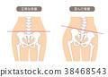 骨架 框架 解剖學 38468543