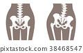 人体骨骼腰部棕色 38468547
