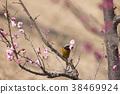 small, bird, redstart 38469924