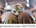 猫 猫咪 小猫 38470395