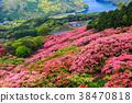 진달래, 철쭉, 구주쿠시마 38470818