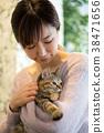 cat, pussy, pet 38471656