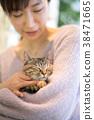 cat, pussy, animal 38471665